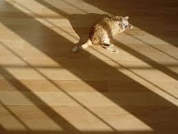 hardwood flooring - pet friendly